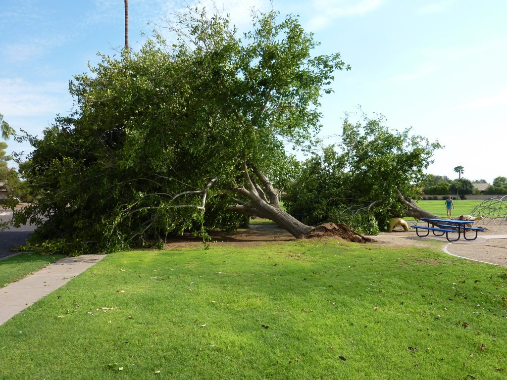 Trees Uprooted in Turtle Park